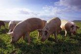 Сасық иіске тұншыққан Ақтөбе облысының тұрғындары шошқа фермасын жабуды талап етті (ВИДЕО)