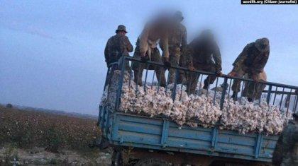 Мақта алқабында «ұйықтаған» екі сарбазды трактор басып, денелері мәйітханадан бір-ақ шықты