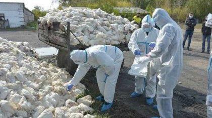 «Жаңажұлдыз ауылынан 5 мыңнан астам құс жойылуы керек»: Павлодар облысында карантин күшейді