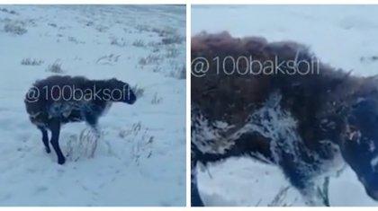 Алматы облысында қой аязды күнде далада қатып қалған