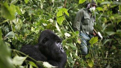 Конгода содырлардың шабуылынан ұлттық парктің алты қызметкері қаза тапты