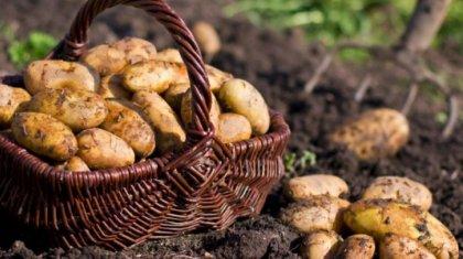 Министр картоп бағасын кім өсіріп отырғанын айтты