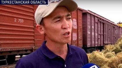 Ауыл шаруашылығы министрлігі Маңғыстауға шөп жеткізу үшін көмек сұрады