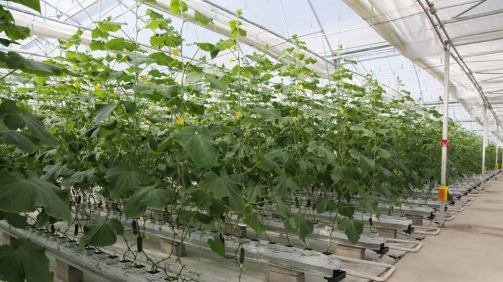 Түркиялық компания Түркістан облысында 200 гектар аумаққа жылыжай салмақ