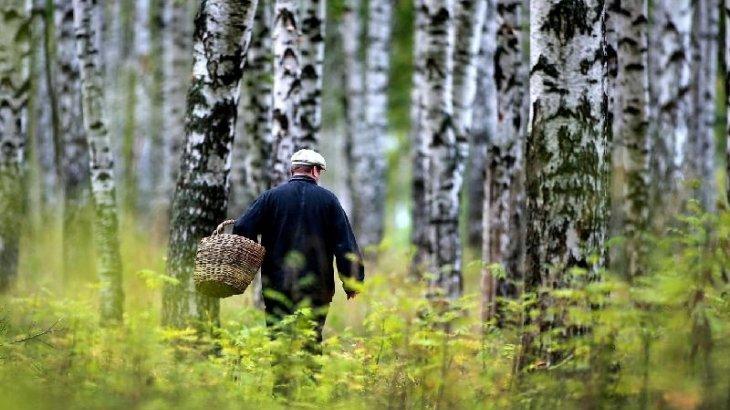 Павлодарда саңырауқұлақ теріп жүрген ер адам жоғалып кетті