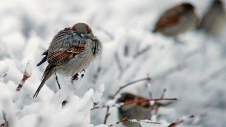 После снегопадов в Казахстане наступят сильные морозы
