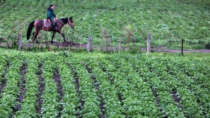 Казахстанский ритейлер готов закупать сельхозпродукцию Кыргызстана