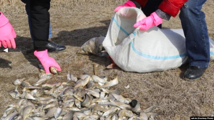 Каспийден заңсыз балық аулаған 4 шетелдікке айыппұл салынды