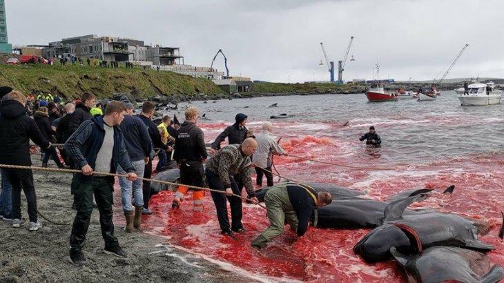 Балықшылар 150 дельфинді жауыздықпен өлтіріп, бухтаны қанжоса қылды