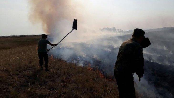 800 гектар жер отқа оранды: Ақмола облысындағы өрт сөндіру жұмыстары жалғасып жатыр