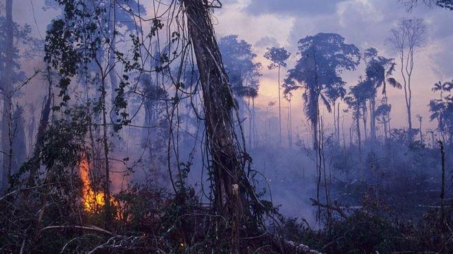 Амазонка өзені бассейні ормандарындa өрт шықты