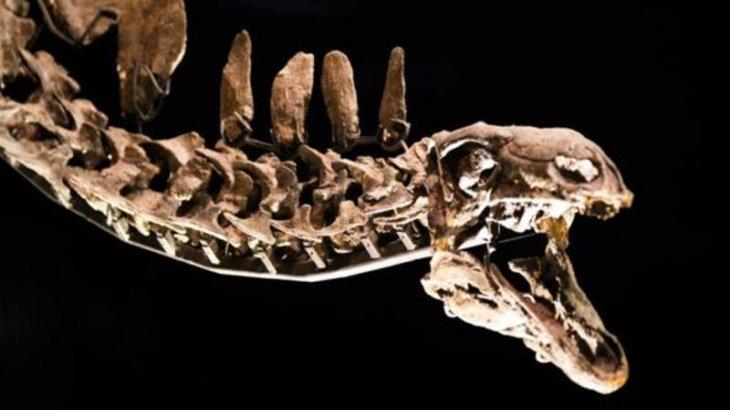 Мароккодан 168 миллион жыл бұрын өмір сүрген стегозавр табылды