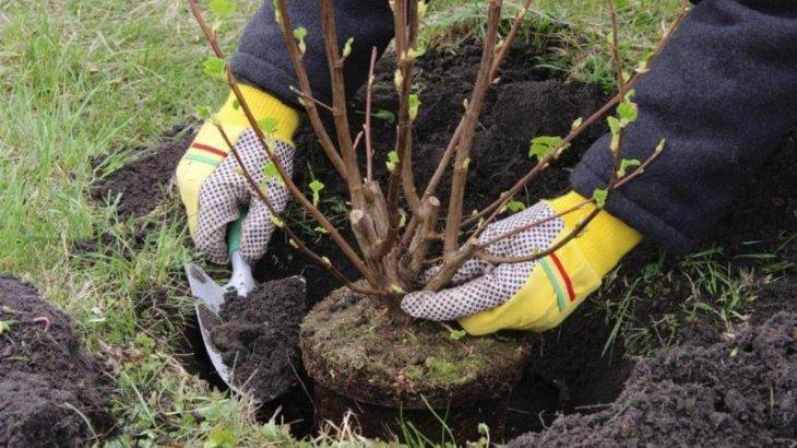Елімізде 1 млн ағаш отырғызылады