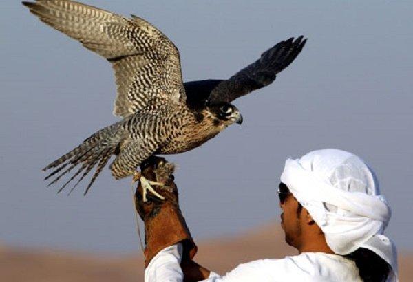Араб шейхтары Қазақстанның аң-құстарын аулайды