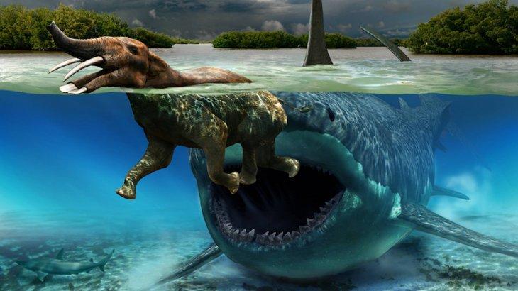 Ақтауда 40 млн жыл бұрын өмір сүрген акула табылды (ФОТО)