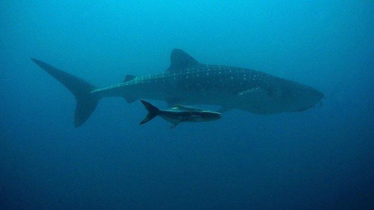 Демалысқа шыққан футболшы акулаға жем болды