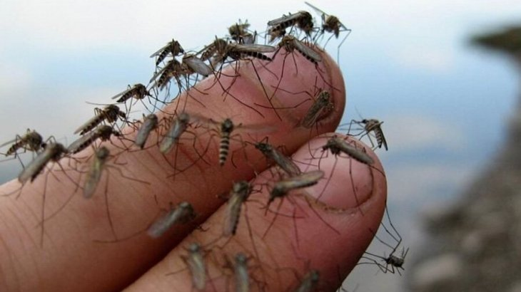 «Түнімен ұйықтатпайды»: Атырау тұрғындары көктем келмей жатып масаға талануда