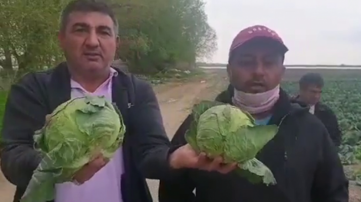 Биыл түркістандық шаруалар қырыққабатты арзан бағамен сатуға мәжбүр болды
