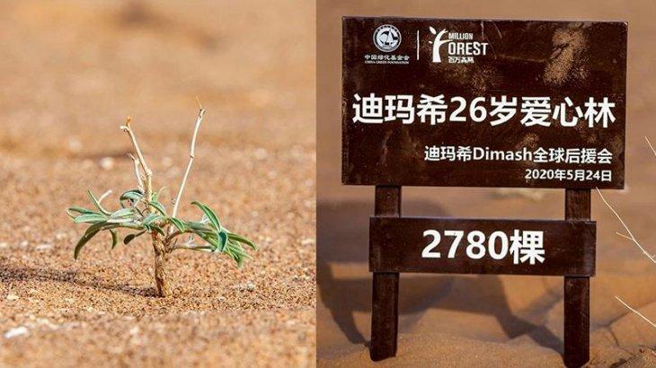 Қытайлық жанкүйерлері Димаштың туған күні құрметіне 3 мыңға жуық ағаш отырғызды