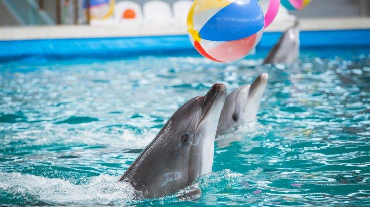 Елімізде дельфинарийлер жабылуы мүмкін