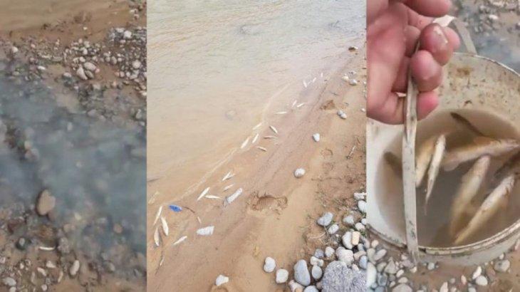 Түркістан облысындағы Бадам өзенінде балықтар жаппай қырылып жатыр