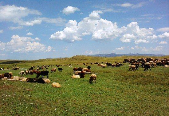 Қазақстанда 10 млн гектар орман алқабы жайылымға беріледі