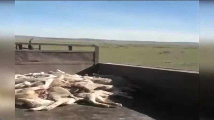 Шығыс Қазақстан облысында мал белгісіз дерттен қырылып жатыр
