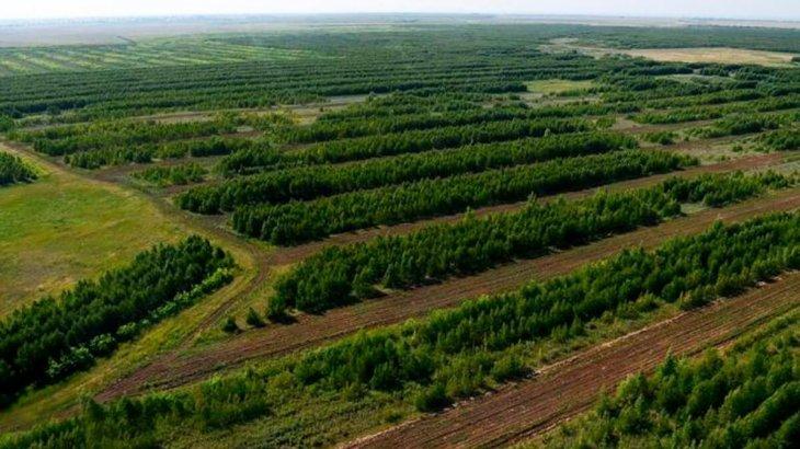 Елімізде 2 млрд ағаш отырғызылады: бұл процесс интерактивті карта арқылы бақыланады