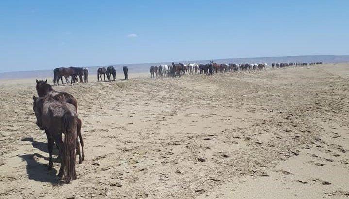 Еуроодақ қуаңшылықтан зардап шеккен қазақстандықтарға 200 мың еуро бөледі
