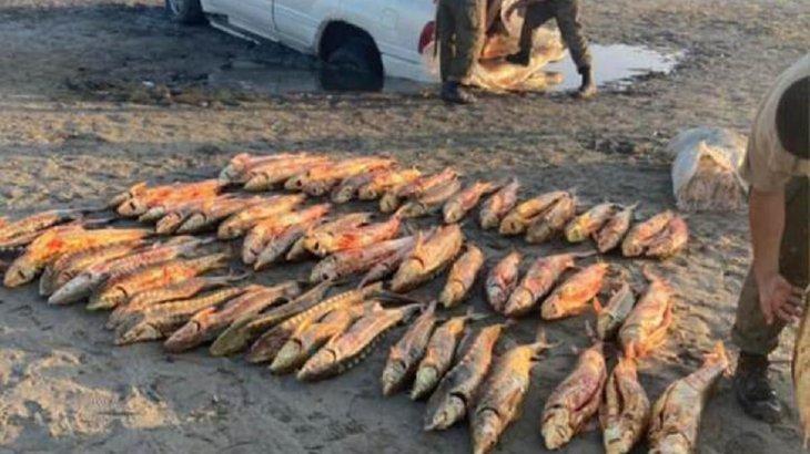 Шекарашылар браконьерлер көлігінен 136 млн теңгенің бекіре балығын тәркіледі