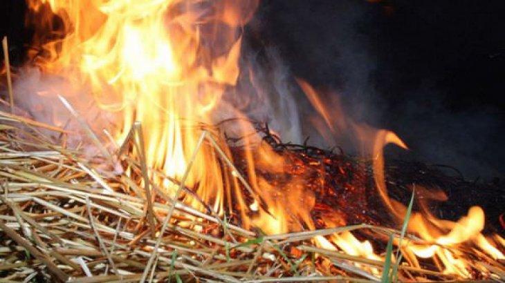 «Қымбаттату үшін әдейі өртейді»: Шығыс Қазақстанда 2000 тонна шөптің күлі көкке ұшты