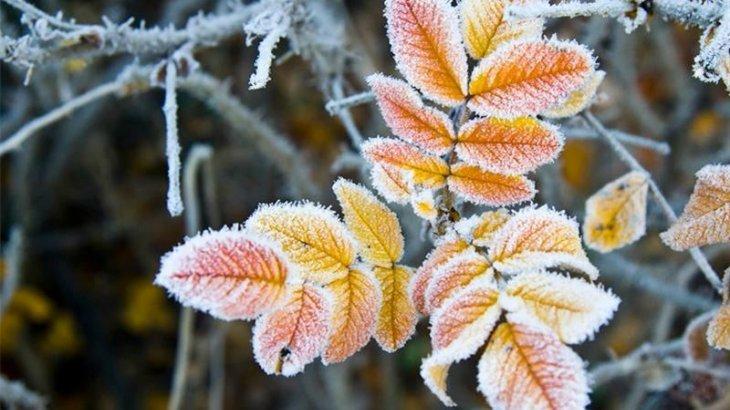 Ертең еліміздің солтүстік өңірлерінде нөл градусқа дейін үсік жүреді