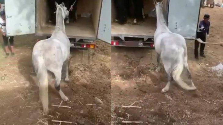 Алматыда жылқыны күрекпен ұрғандардың видеосы тарады
